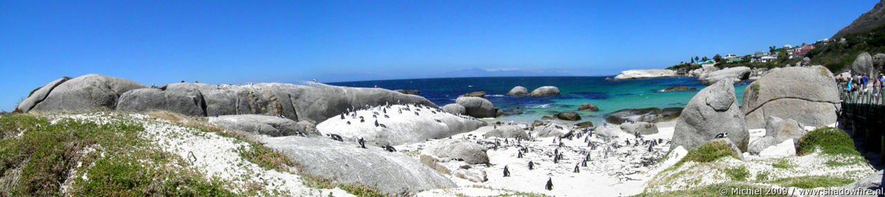 penguin panorama penguin, Penguin Colony, The Boulders, Cape Peninsula, South Africa, Africa 2011,travel, photography,favorites, panoramas