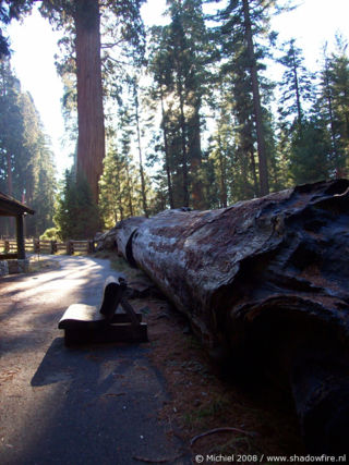Giant Forest Museum, Giant Forest, Sequoia NP, California, United States 2008,travel, photography
